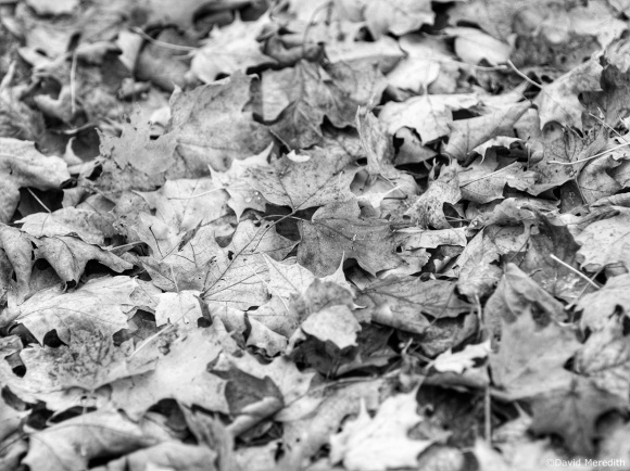 Cee's Black and White Photo Challenge: Things That Fly