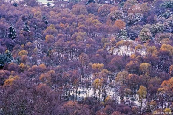 Throwback Thursday: Autumn Colour in Early Snow