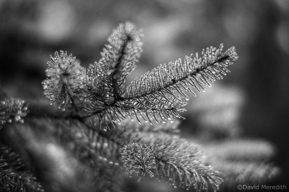 Monochrome Monday: 7th December 2020
