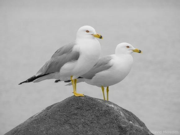 CBWC: Birds