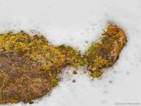 Six Word Saturday: Green Moss, Orange Lichen and Snow
