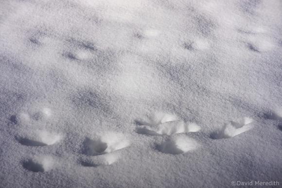 Six Word Saturday: Sets of Tracks in the Snow