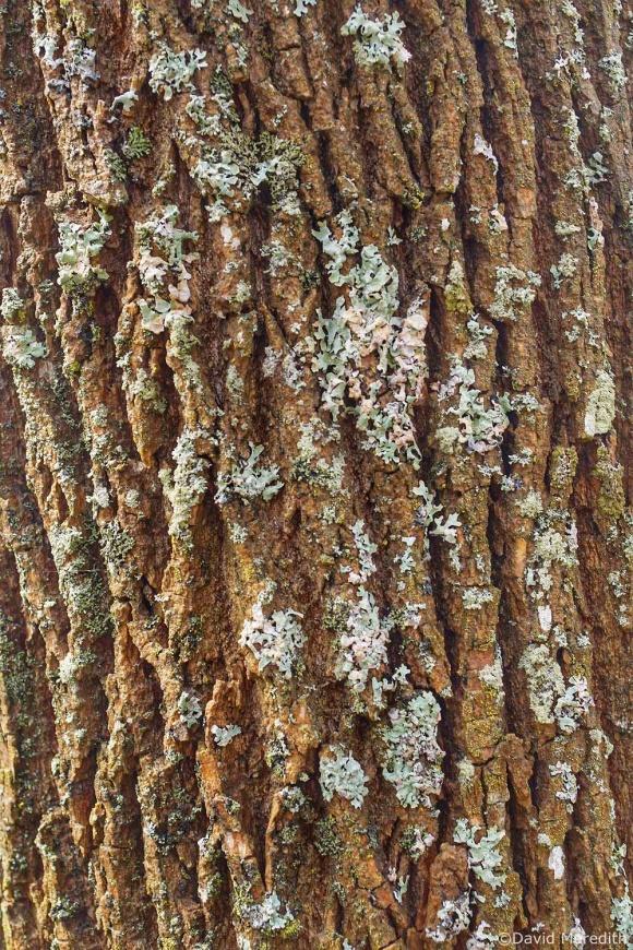 2021: Bark and Lichen Texture