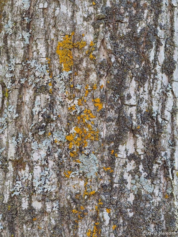Six Word Saturday: Multi Coloured Lichen on Tree Bark