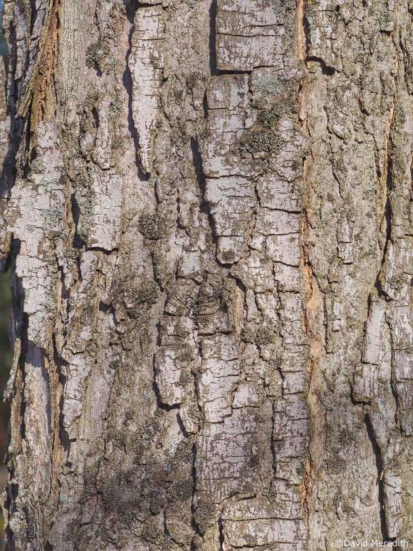 CFFC: Texture
