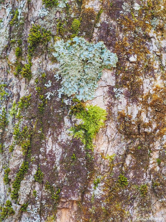 Six Word Saturday: Moss and Lichen on Tree Bark