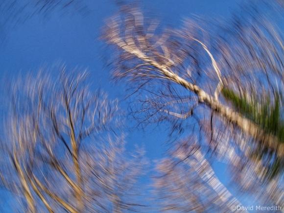 Swirling Tree Tops