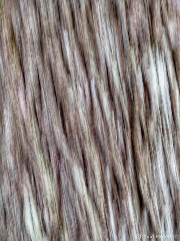 2021: ICM of tree bark
