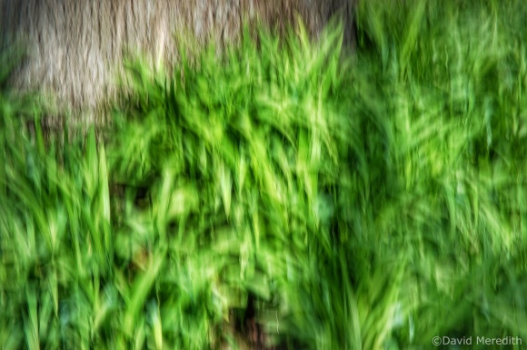 2021: ICM of Daylily Leaves