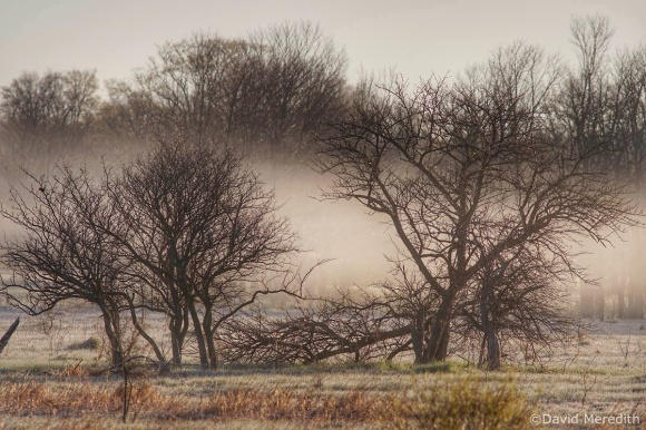 2021: Patchy Mist Over the Scrubland