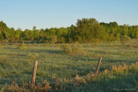 2021: Two Fence Posts and some Greens