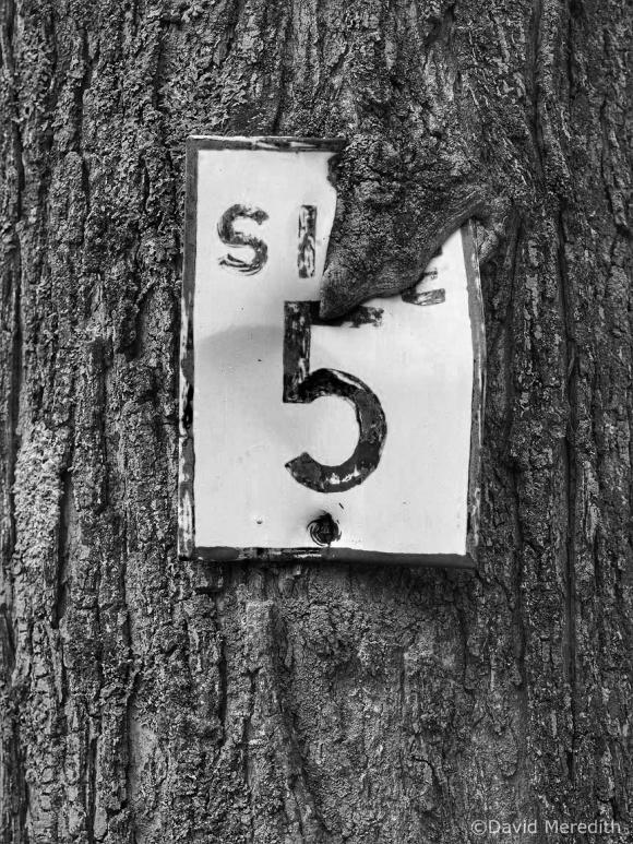 CBWC: Five