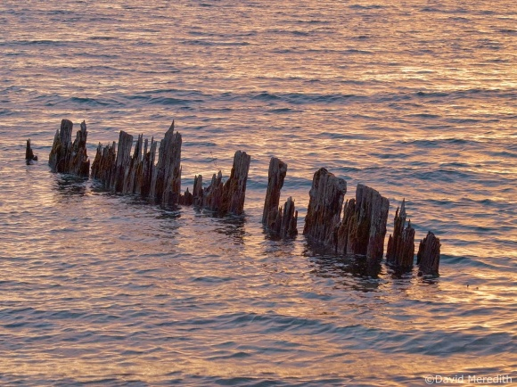 Travel Tuesday: Old Wooden Piles