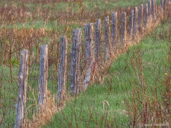 Six Word Saturday: First Light on an Old Fence