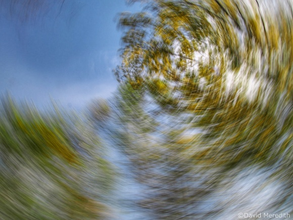 2021: Spring Trees with ICM
