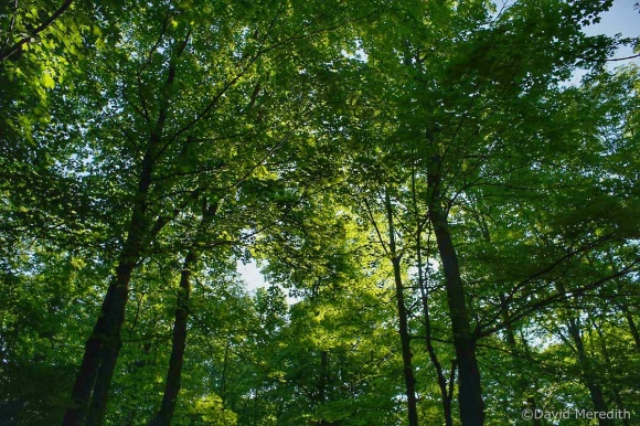Cosmic Photo Challenge: In the Trees