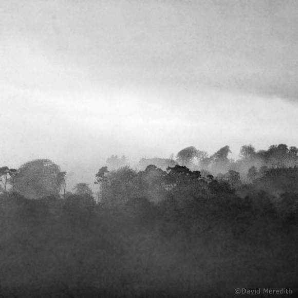 CBWC: Monochrome Trees