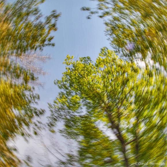 Six Word Saturday: Rotational camera movement of spring trees