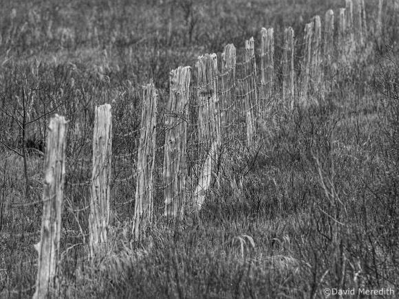 CBWC: Fence Posts