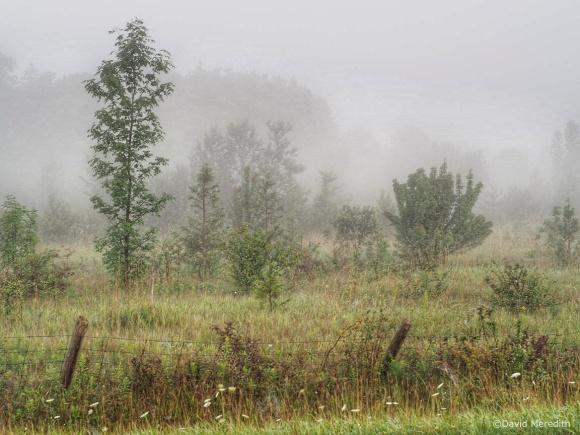 2021: Scrubland in the mist