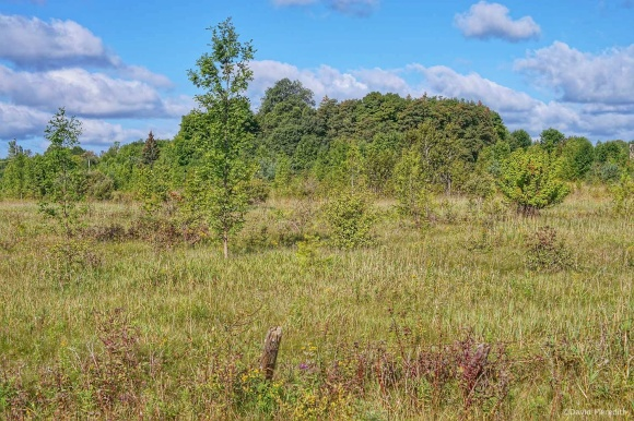 2021: Scrubland in late summer