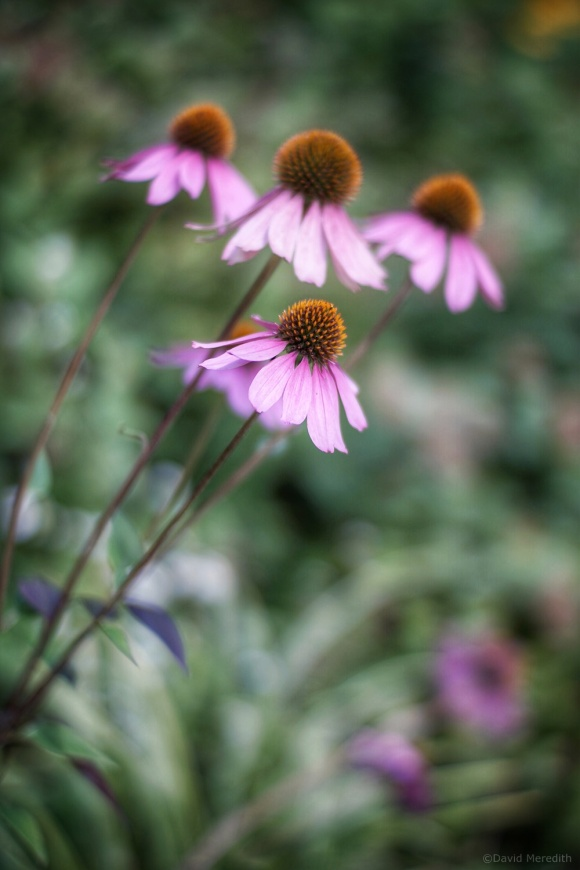 2021: Fading Summer Flowers