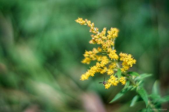 Cosmic Photo Challenge: Focus on Flowers