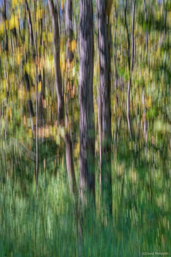 2021: ICM of trees in late summer