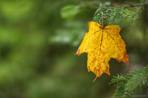 Lens-Artists: Colours of Autumn