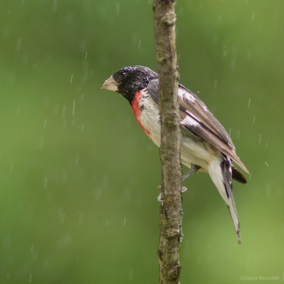 Past Squares: #16 A Bird In the Rain