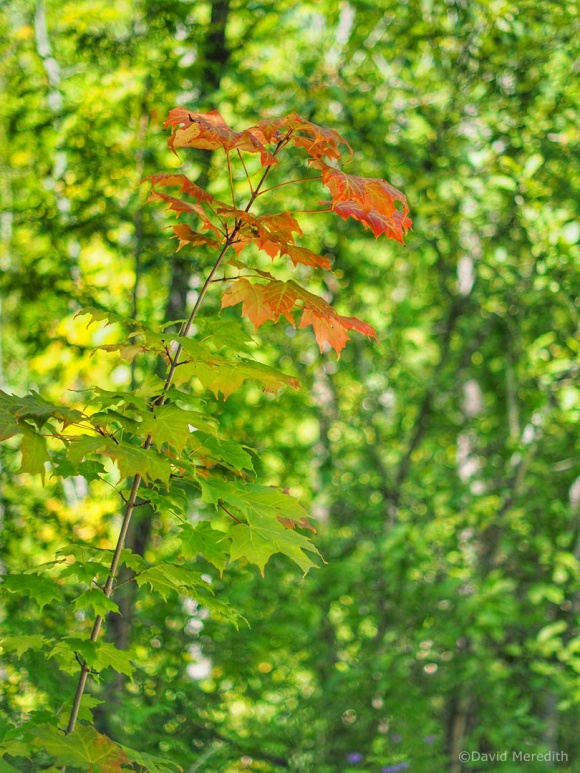 2021: Early Sign of Autumn
