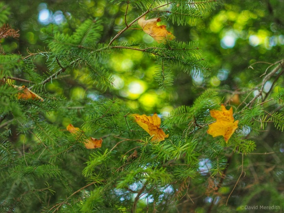 2021: An Early Sign of Autumn