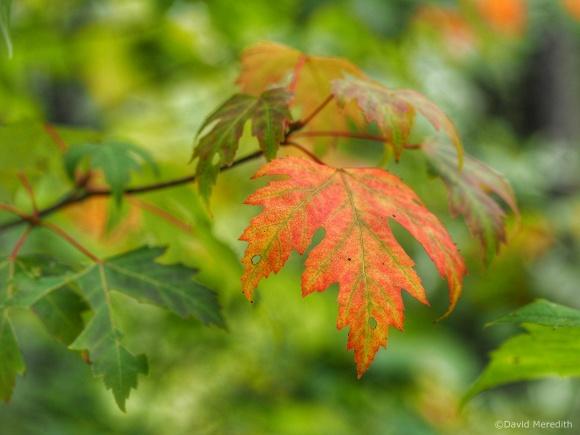 2021: A Splash of Fall Color