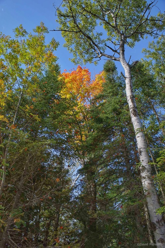 Getting Back to Basics: A Splash of Colour In the Treetops