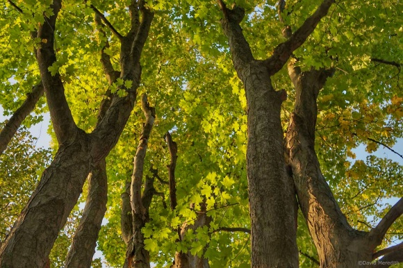 Six Word Saturday: Light and Shade Under the Maples