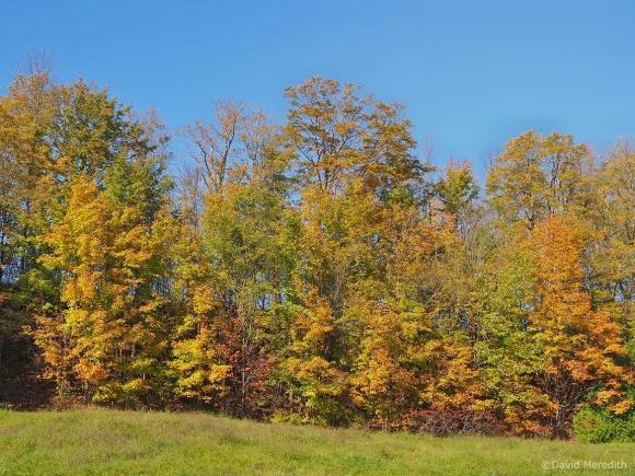 2021: A Range of Autumn Colours